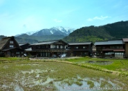 Rice Paddy in the Free Area